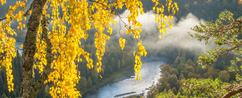 Maisemakuva jossa joki ja ruskaa PEFC valokuvakilpailun voittaja